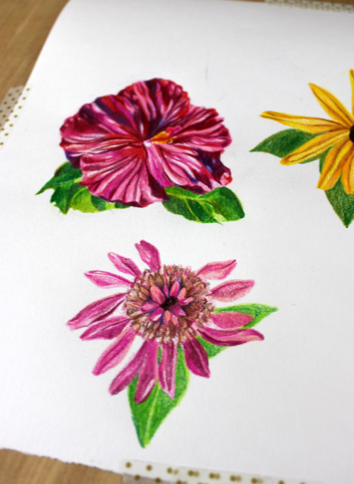 Trio of flowers drawn with colored pencils