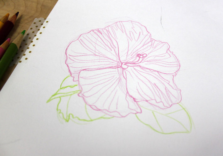 Flower drawing with some detail