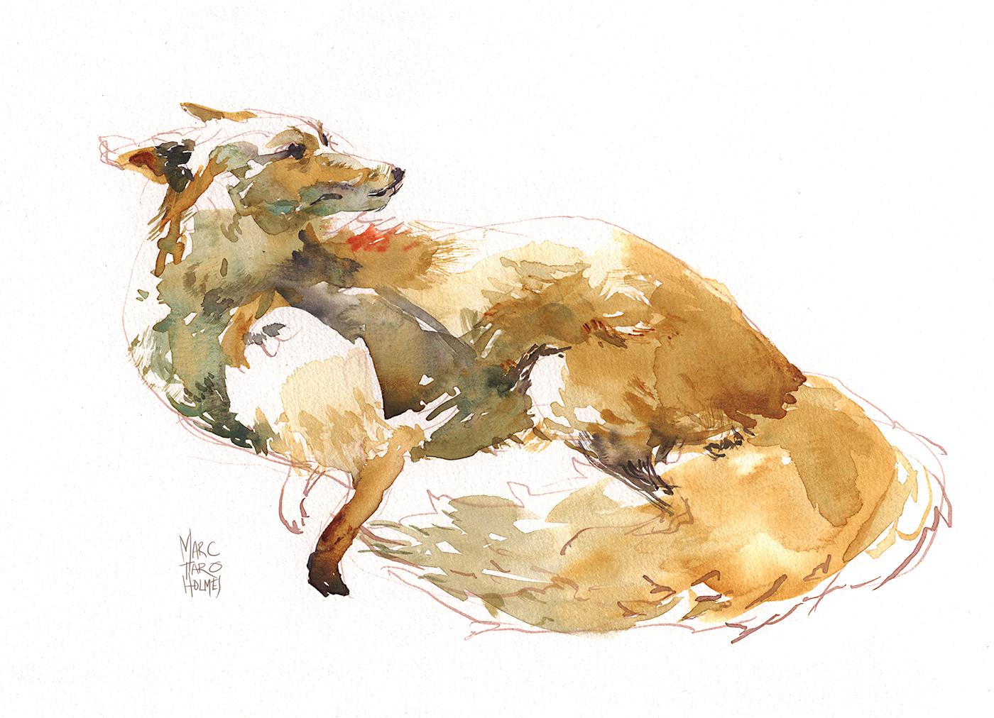 marc taro holmes fox sketch