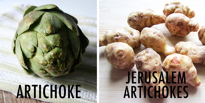 Artichokes versus Jerusalem artichokes