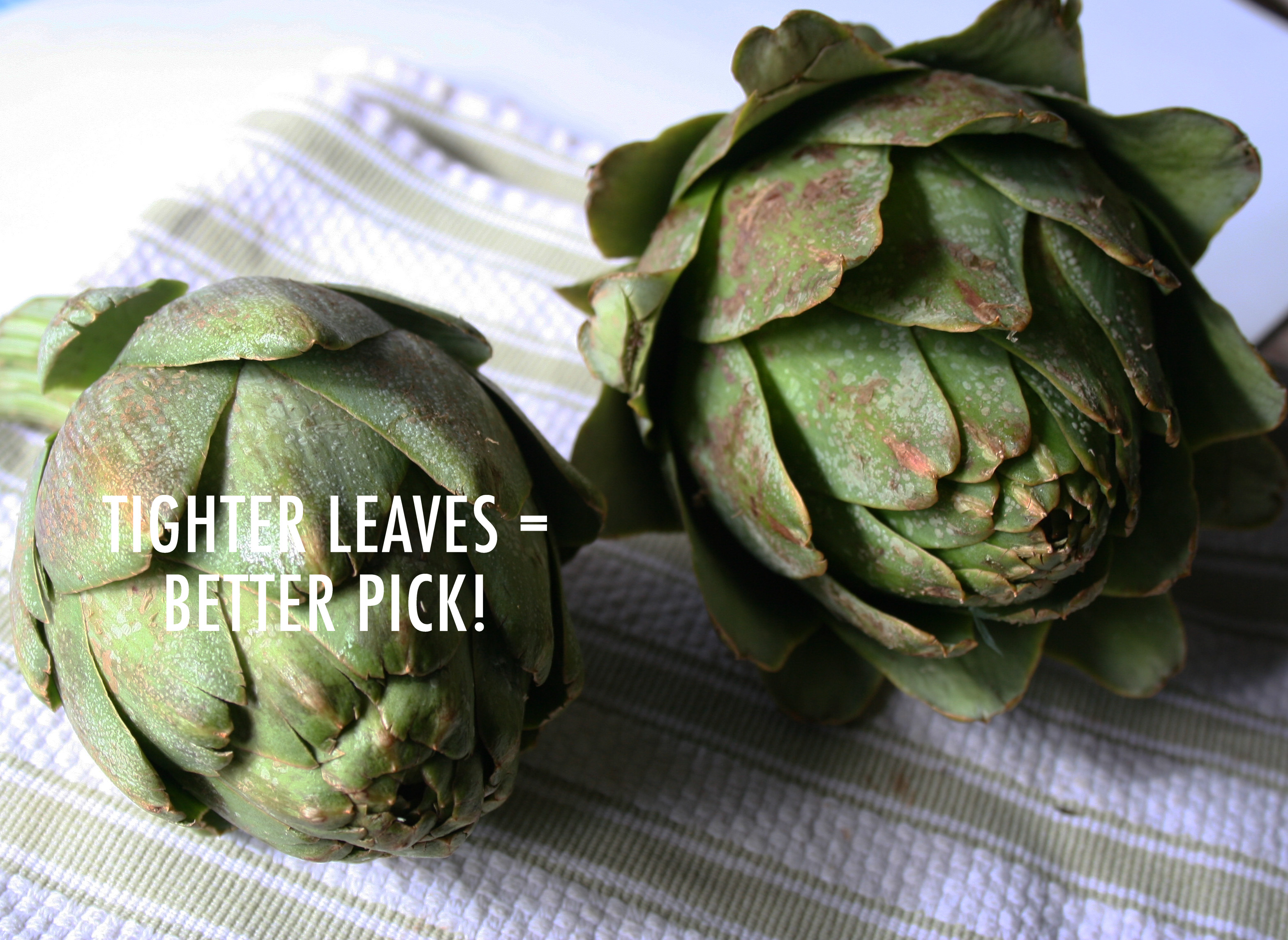 Things to look for when choosing an artichoke