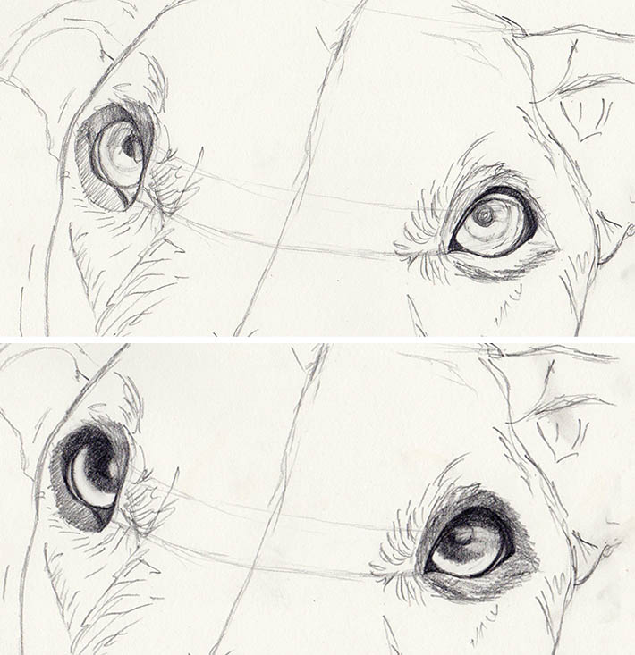 How to Draw Dog Eyes Step By Step