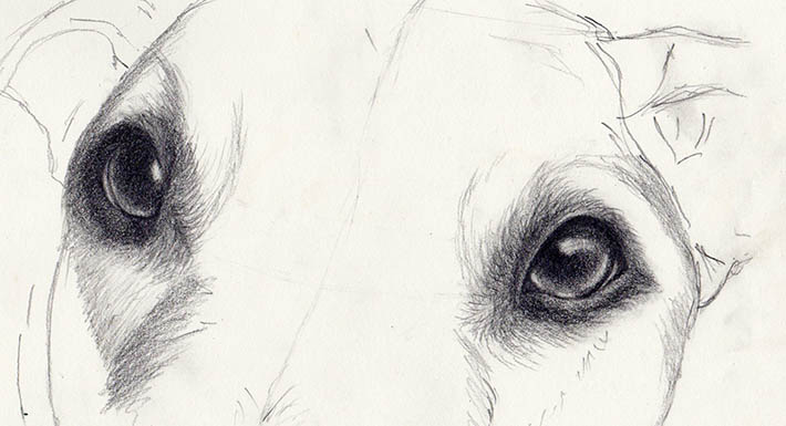 drawing dog eyes in steps