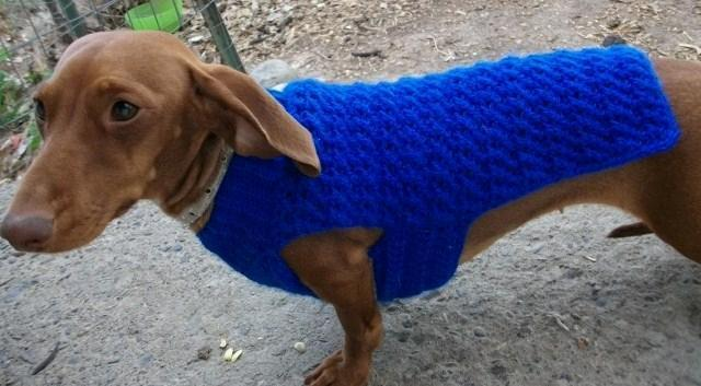 Dachshund and Small Dog Coat Crochet Pattern