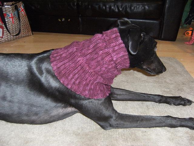 Greyhound Snood Free Crochet Pattern