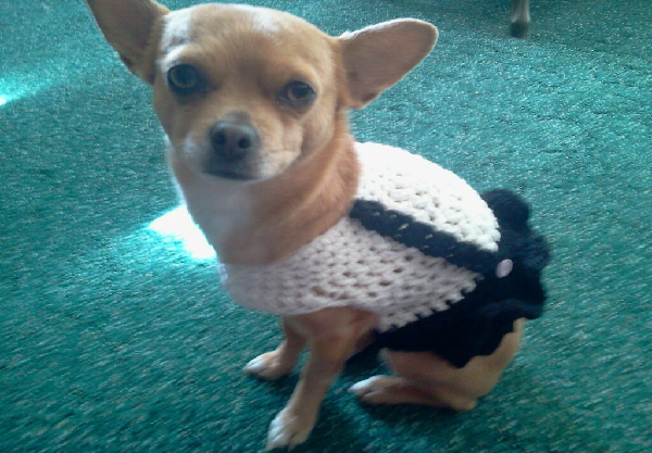 Simple Suspender Dog Dress FREE Crochet Pattern