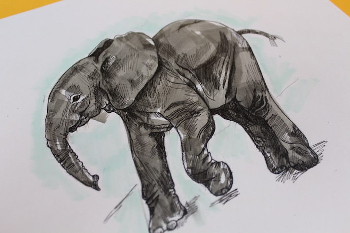 Learn how to drawn an elephant with this tutorial