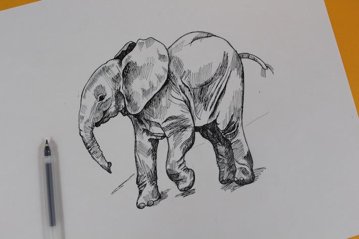 Elephant drawing shaded