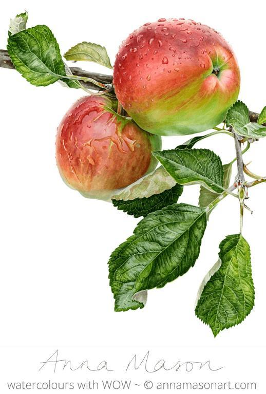 Anna Mason Acme Apple
