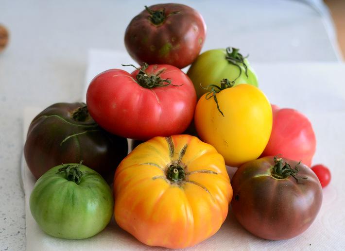 A Pile of Rainbow Heirloom Tomatoes