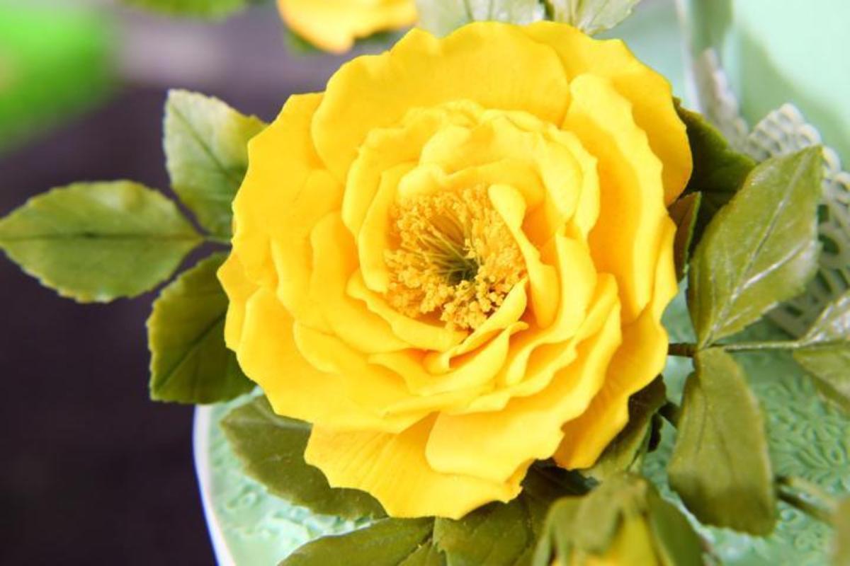 Sugar Rose by Bluprint Instructor Nicholas Lodge