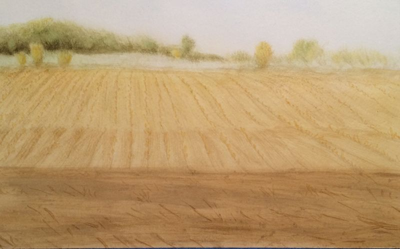 Cornfield Landscape Painting Halfway Through