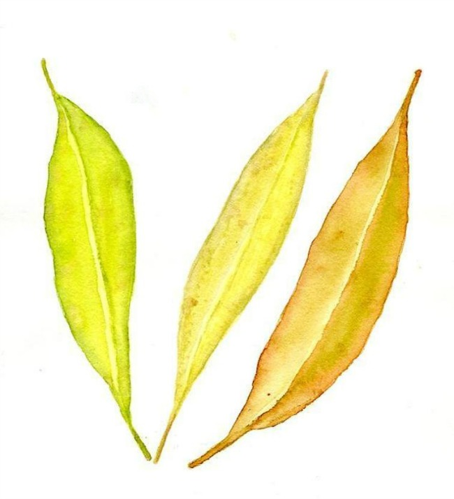 Yellow Fall Leaves Painting