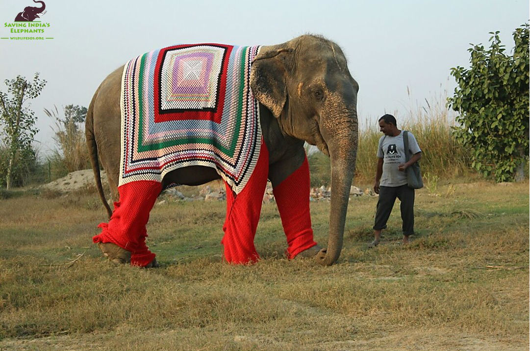Elephant in Knitted Sweater