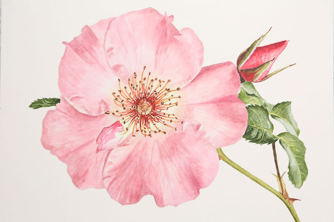 Realistic Watercolor FLower by Anna Mason