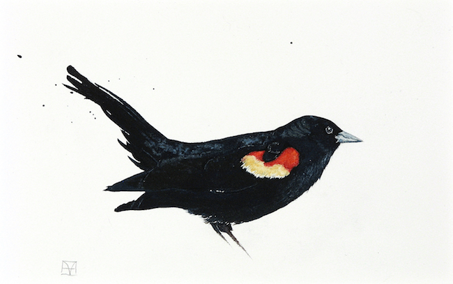 Blackbird painting