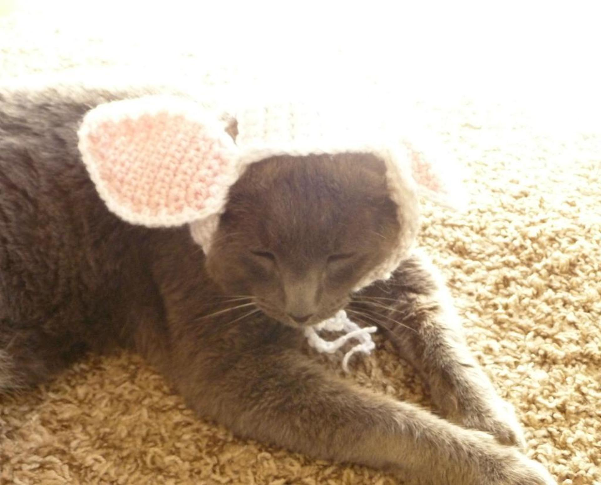 bunny hat for cats crochet pattern