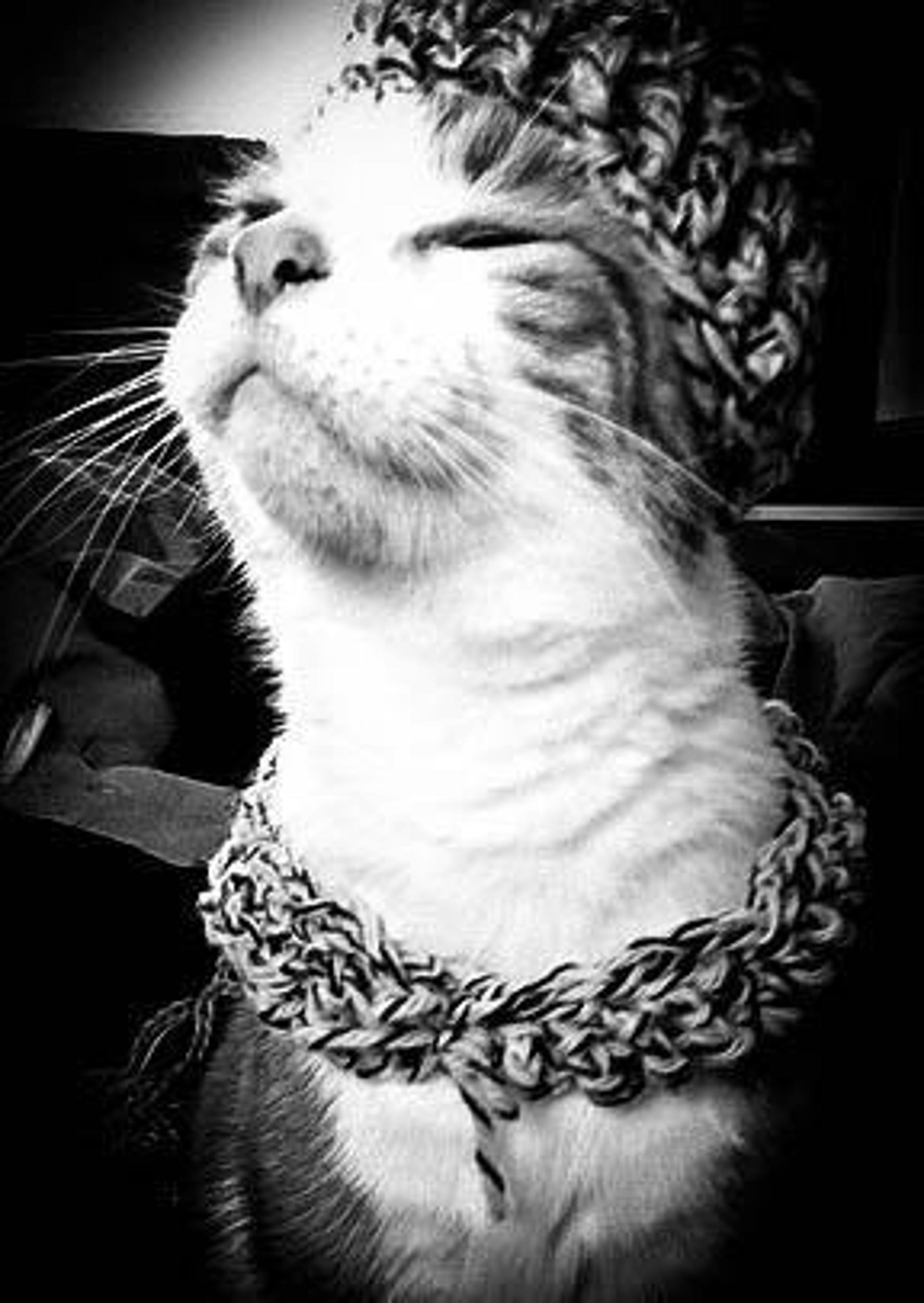 cat hat and scarf free crochet pattern