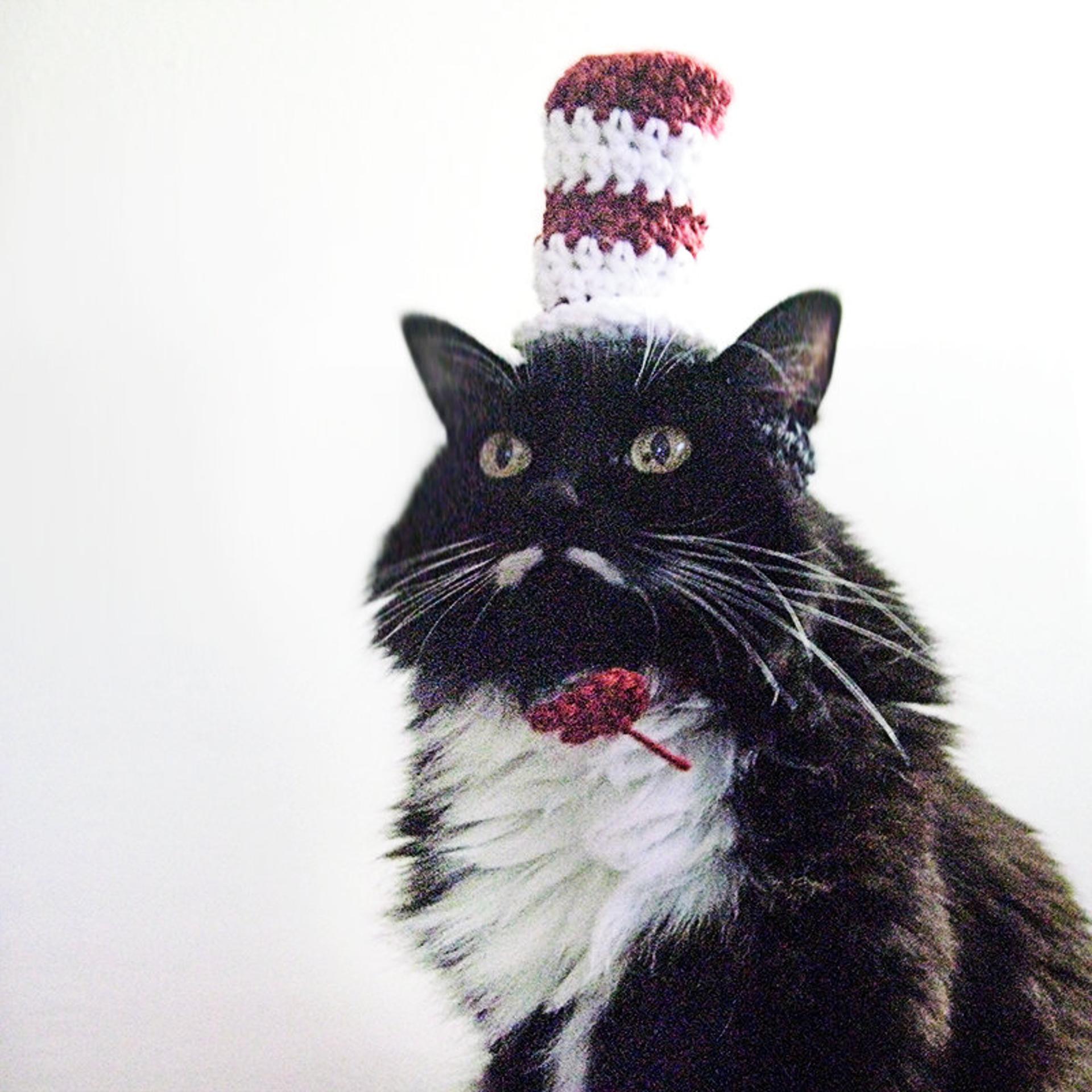dr seuss crochet hat for cats