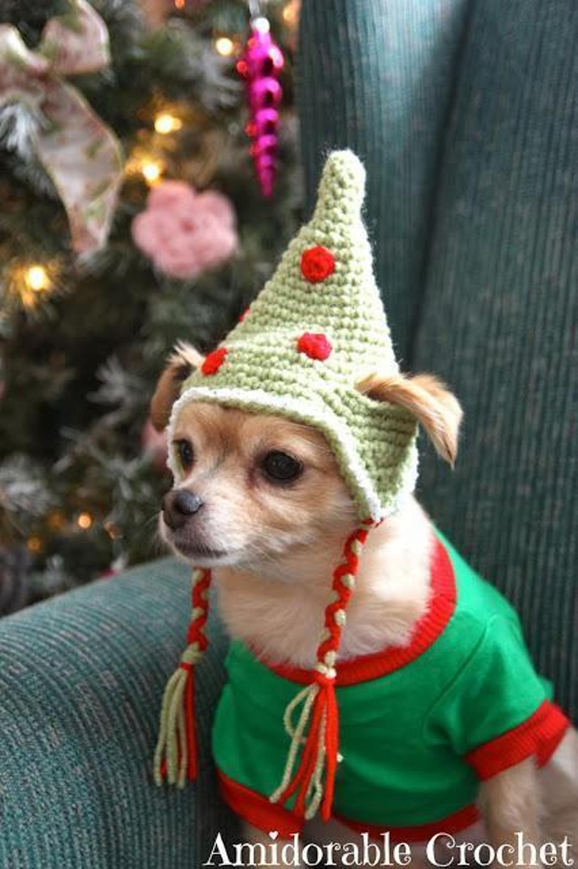 chihuahua dog hat pattern