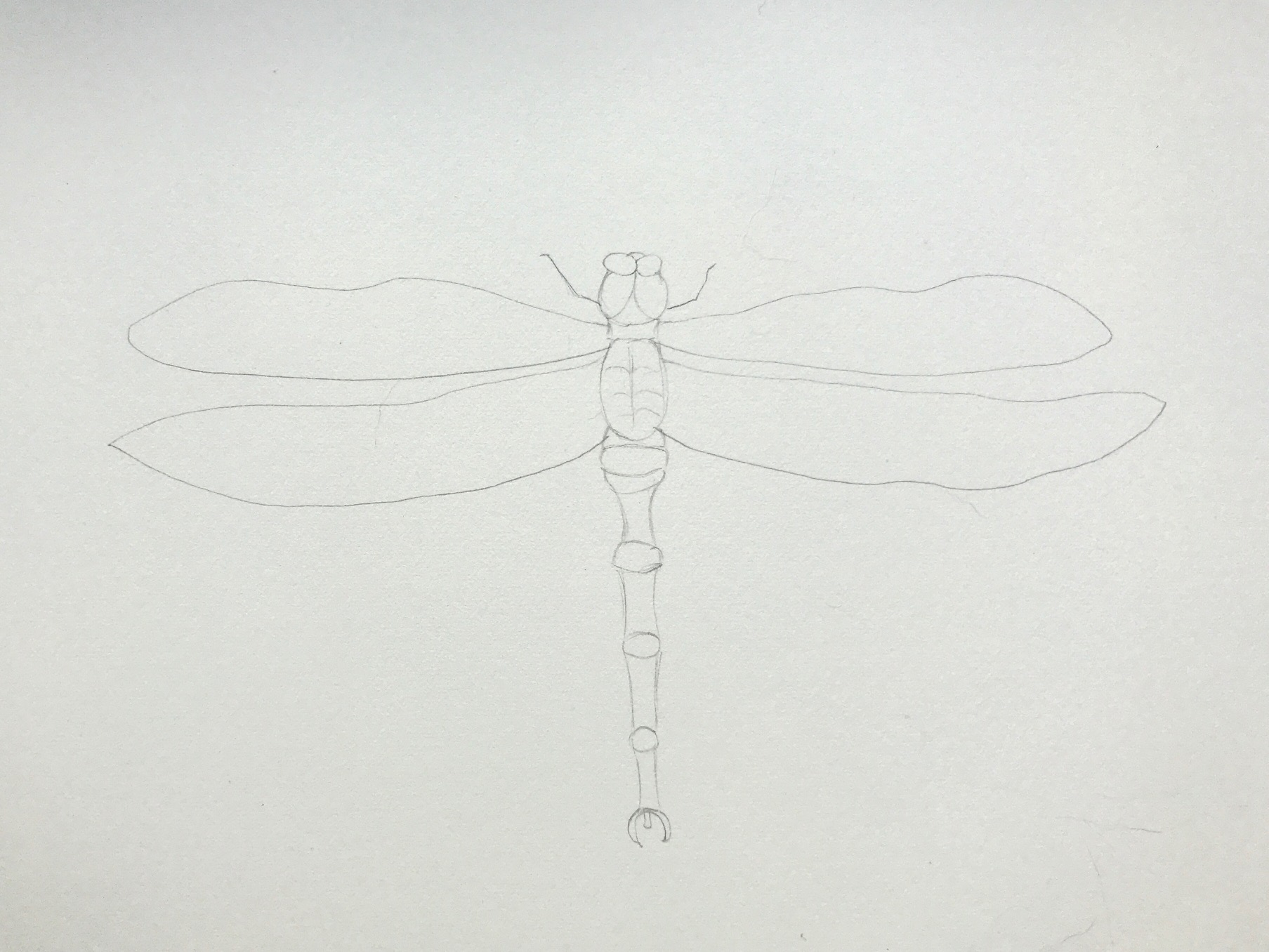 sketch dragonfly in pencil