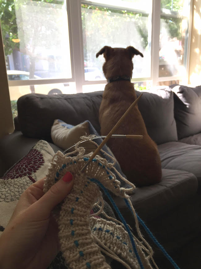 Broken Knitting and Dog