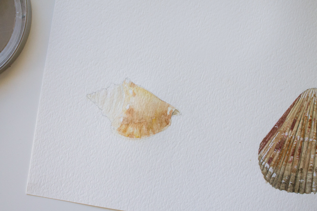 Conch painting