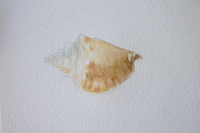 Sea shell conch painting