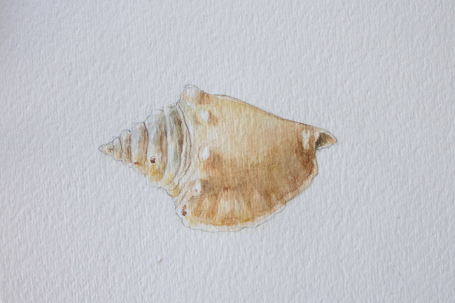 Conch shell painting