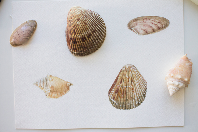 Final sea shell paintings