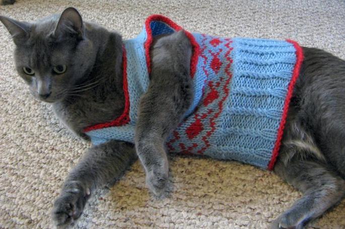 cat sweater