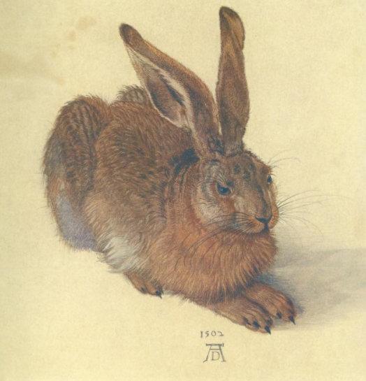 Watercolor Study of a Brown Hare, Albrecht Durer