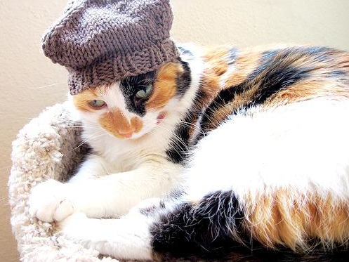 Cat Wearing Knit Hat