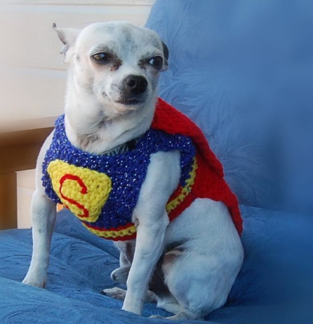 Dog Wearing Superman Sweater