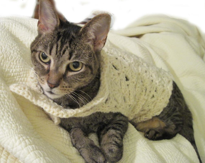 Cat Wearing Crochet Garment