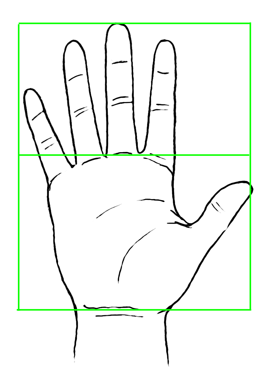 Drawing of Hand with Segments Indicated