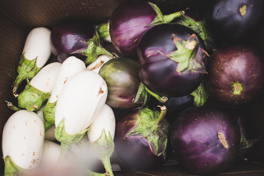 Collection of Multicolored Eggplants