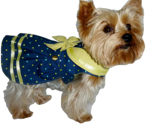 Dog Wearing Yellow and Blue Sailor Outfit