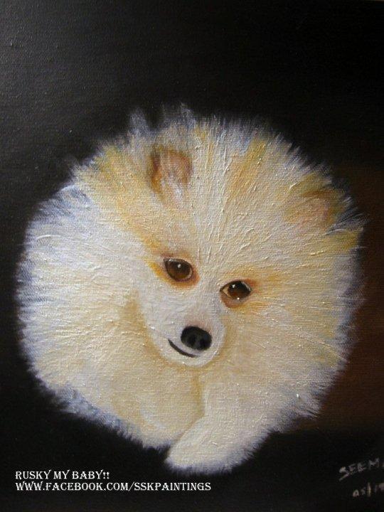 Portrait of Fully Pomeranian
