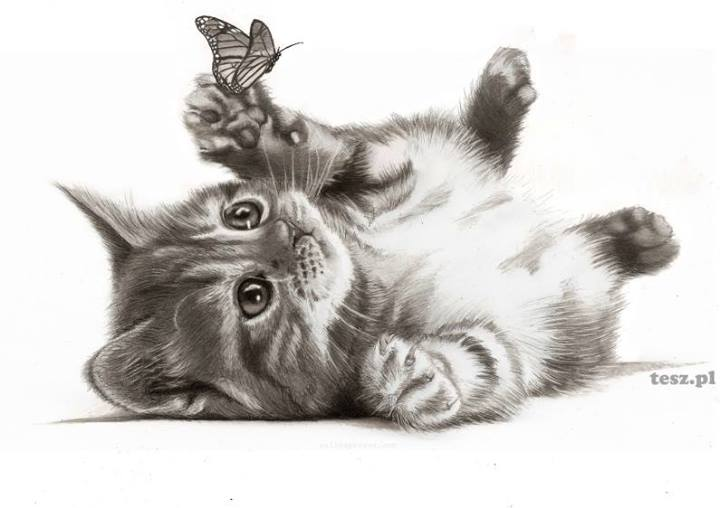 Drawing of Kitty Playing with Butterfly