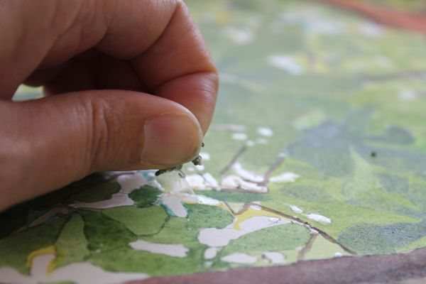 removing masking fluid by pulling gently with fingers