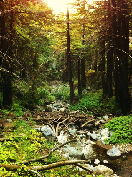 iPhone Photography: Stunning Shot of the Forest