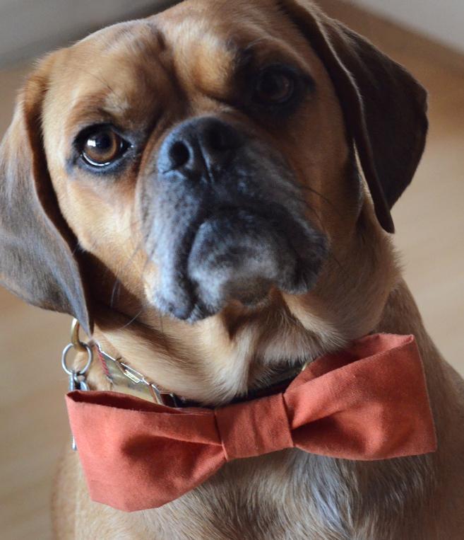 Dog Bow Tie - www.craftsy.com