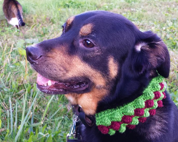 Crocheted Dog Collar