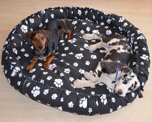 2 Dogs on Paw-Patterned Dog Bed