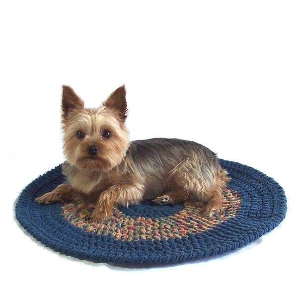 Little Doggie on Pet Blanket
