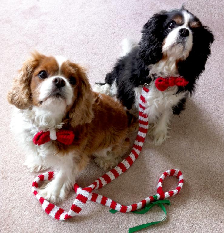 Holiday Knit Dog Leash