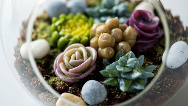 Suculentas y cactus en crema de mantequilla
