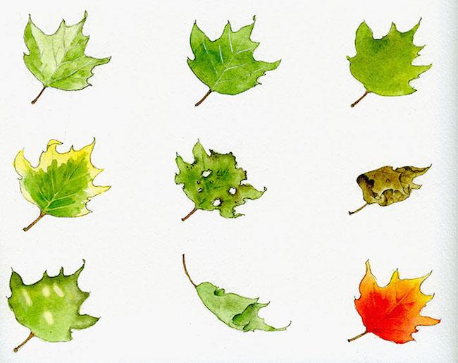 Dibujando hojas