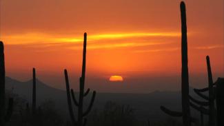 FMH 013237f_Y0D64U_c Saguaro, Arizona PREMIUM